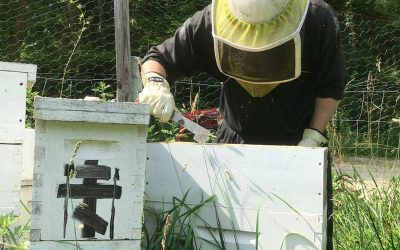 The Hidden Work of Bees and Monks