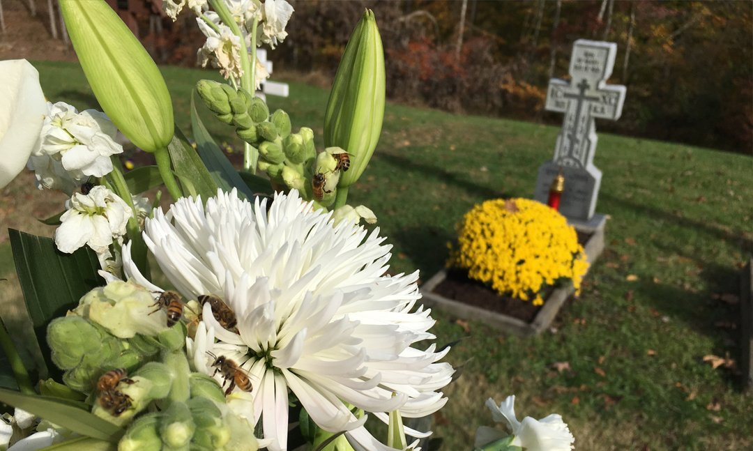 Monastery Honey Bees on the flowers on Nadya Sills Grave, November 2019l's